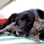 How to Spot Cognitive Dysfuntion in Older Pets