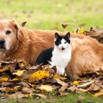 cat-and-dog-and-autumn