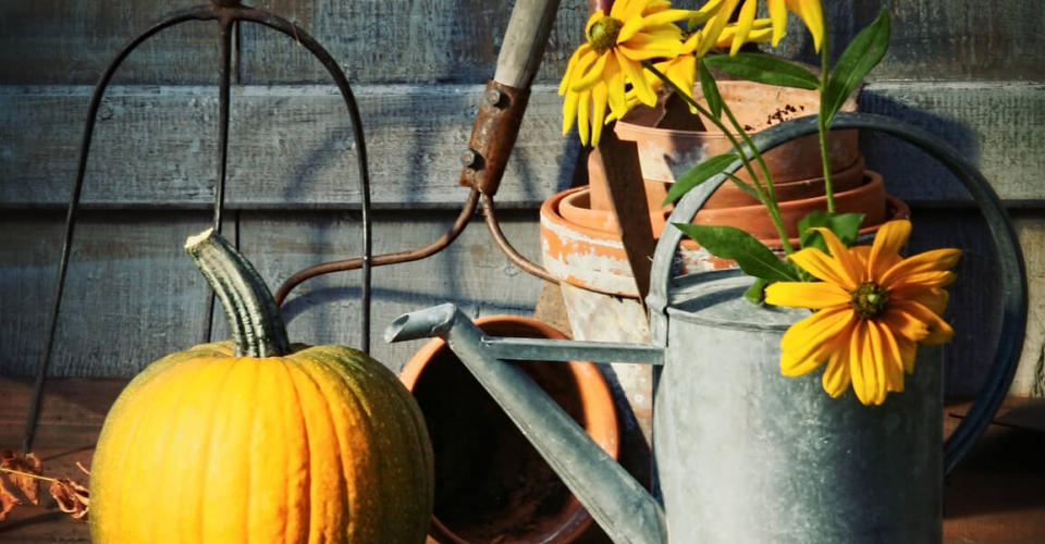 Four Keys to Successful Autumn Planting